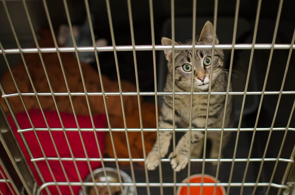 4 Cara Membuat Kandang Kucing dari Besi Holo dengan Mudah